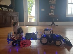 A kitten on a toy wagon decorated with blue lights