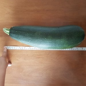 A long zucchini next to a measuring tape